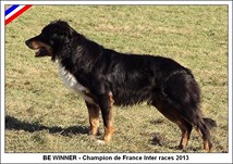 BE WINNER - Border Collie - Champion de France inter races ovins 2013